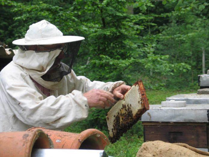 Un cadre plein de miel