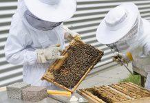 Des apiculteurs