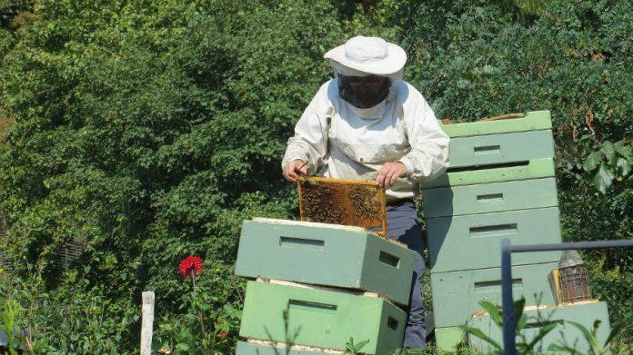Un apiculteur et ses ruches