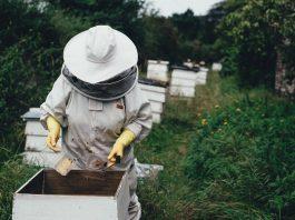 Une apicultrice