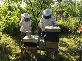 Deux apiculteurs