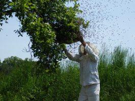 Un apiculteur