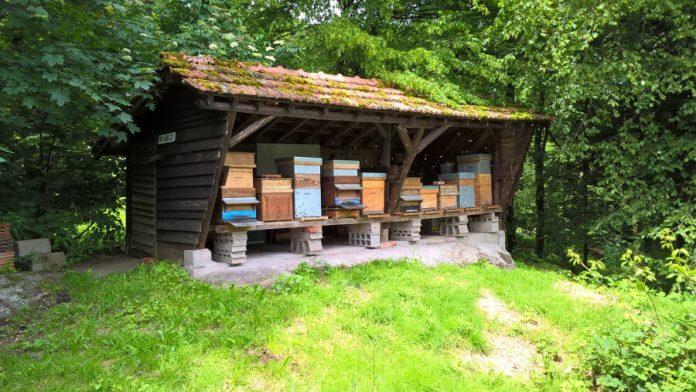 Des ruches