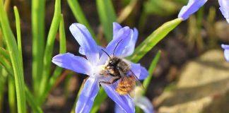 Une abeille sur une fleur sauvage