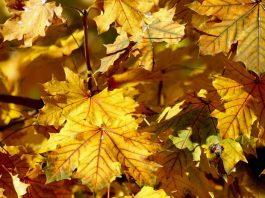 Des feuilles d'automne